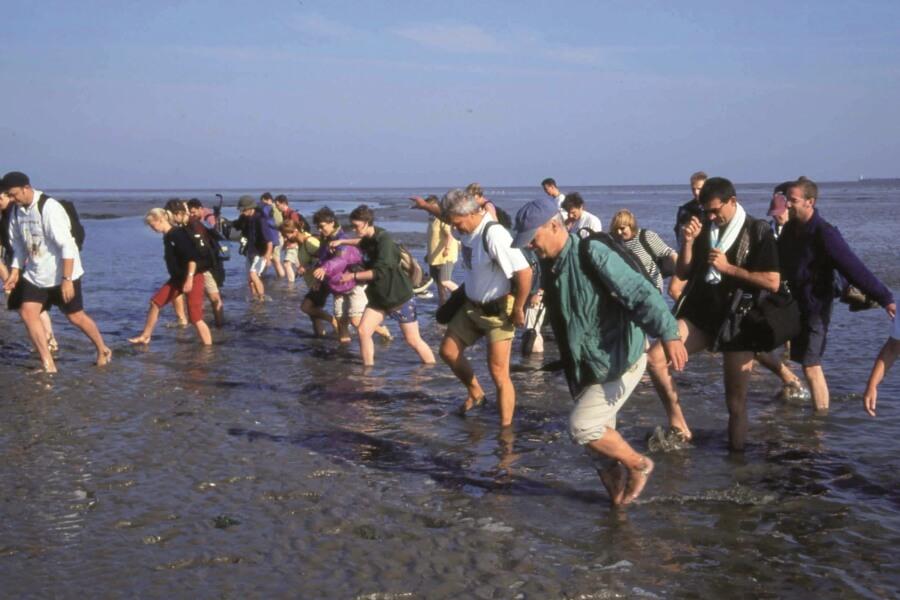 Wattwanderung im Wattenmeer